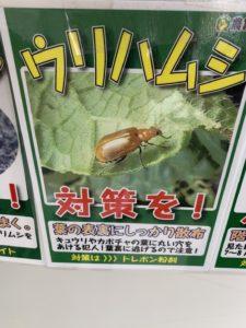 農薬 ウリハムシ